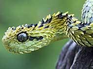 五颜六色的蛇高清组图