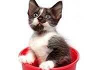 灵活乖巧的猫咪高清桌面壁纸