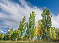 美丽秋天树林风景图片优美壁纸