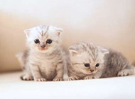 可爱卖萌的小猫咪组图