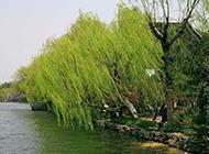 杭州西湖优美风景图片壁纸大全