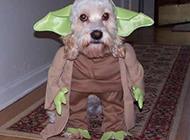狗狗搞怪服装太拉风了