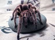 色彩斑斓的蜘蛛精美图片
