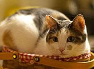 超萌可爱的小猫咪图片大全