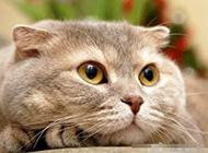 二货猫咪图片呆萌好玩