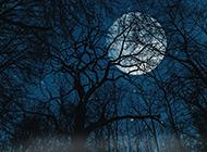 静谧浪漫树林夜景图片欣赏