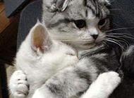 猫咪搞怪图片之有我在