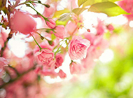 小清新迷人花卉桌面壁纸