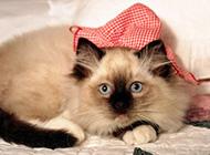 慵懒可爱猫咪高清图片