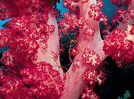 神奇缤纷的海底藻类世界精美壁纸