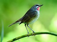 鸟类图片背景微距特写