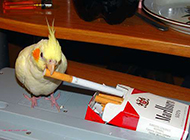可爱动物搞笑图片之这厮的烟瘾又犯了