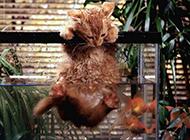 小猫咪宠物图片特写
