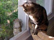 动物爆笑图片之你好吗