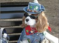 史上最新潮时尚的明星狗