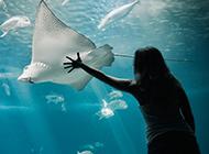 海洋馆的动物锯齿鳐鱼图片