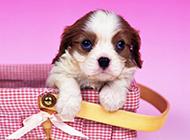超可爱的萌宠狗狗壁纸