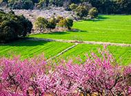 春天浪漫平原风景图片
