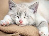 熟睡的可爱猫咪精美宠物美图集