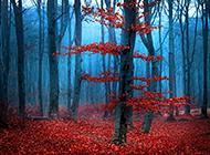 红树林唯美梦幻风景图片