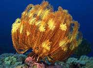 千奇百怪的珊瑚海葵组图