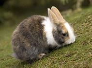 超萌可爱的小兔子摄影图片