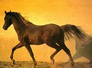疾驰的骏马摄影合集