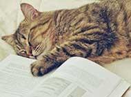 睡梦中的可爱小猫高清图片