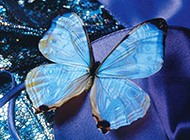 蝴蝶与花缠绵高清组图