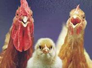 动物爆笑趣图之全家福