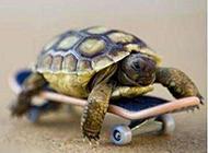 超搞笑动物图片之这样跑得快多了