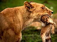 动物之间的感动场景