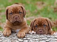 调皮可爱的小狗狗高清图片