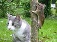 玩躲猫猫咯搞笑微信图片头像