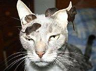 爆笑猫咪被凌辱图片