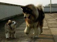 狗狗搞笑囧图片