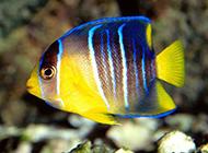 深海世界美丽海洋生物图片