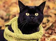 可爱猫咪冬日围巾温馨图片秀