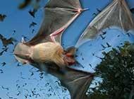 网友提供:蝙蝠高清唯美图片