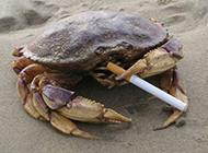 每日爆笑 会抽烟的螃蟹