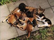 搞笑猫咪图片大全之超生游击队