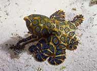 缤纷多彩的海底世界高清壁纸