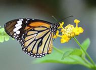 蝴蝶图片素材清新优雅