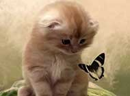 呆萌小奶猫可爱卖萌美图集