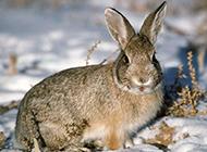 胖嘟嘟可爱小兔子高清图片