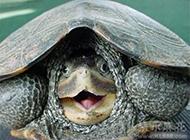 卖萌的乌龟图片