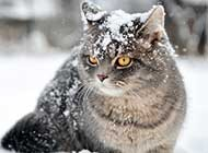 懒样可爱小猫咪高清图片