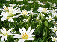 唯美春天迷人花卉高清壁纸