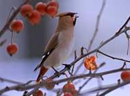 树枝上可爱的小鸟