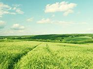 绿色草原风景壁纸清新怡人